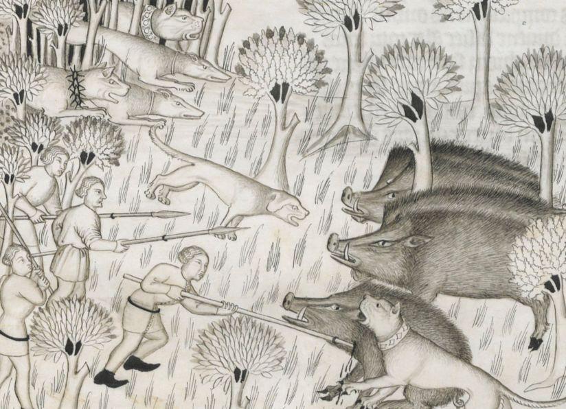 Illuminated Manuscript. Gaston Fébus. Livre de la chasse. Wild Boar. Medieval Hunting.
