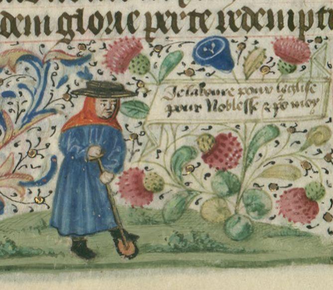 Gardening in the Middle Ages. Illuminated Medieval Manuscript. Illumination. Garderner. Gardening. Strawberry. Third Estate.